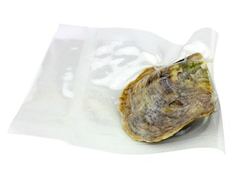 50x Akoya Oysters with pearl