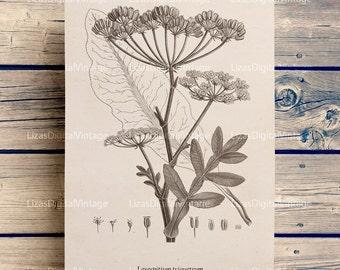 Wall art vintage, Illustration, Antique prints, Botanical, Instant download print, Botanical wall art, Printable prints, PNG JPG 300dpi