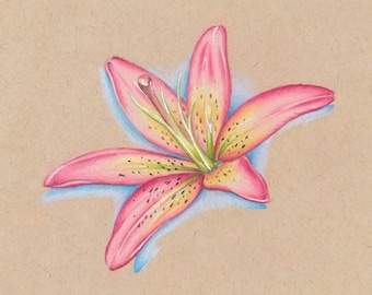 Pink Lily Flower Colored Pencil Drawing - Art Print