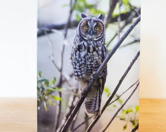 Greeting Card Pack - 5 x 7 inch Folded  - Long Eared Owl, R Lazy S Ranch, Wyoming