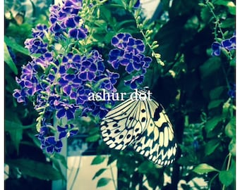 """White and Black Butterfly 4x4"""" Print"""