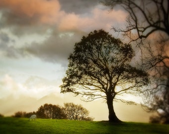 Ireland Photography, Tree Photography, Bokeh, Emerald Isle Photography, Irish Landscape Photography, Large Wall Art
