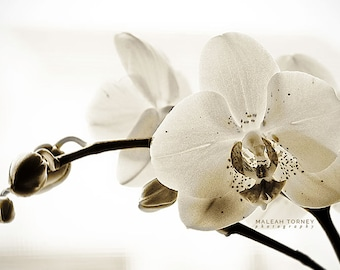 White Orchid Photo, black and white, flower photography, modern, wall art, minimal