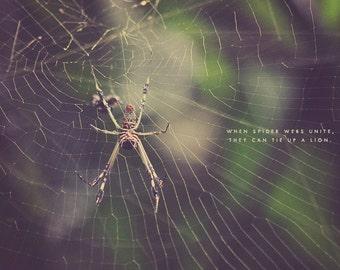 Spider Web, Spider Photo, Spider Photography, Spider Art, Spider Print, Spider Lover, Spider Gift, Spider Web Art, Spider Web Photo