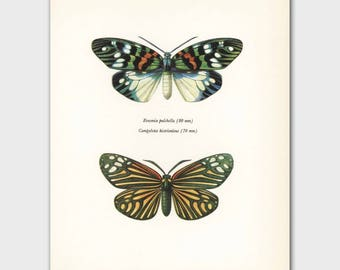 Butterfly Artwork (Vintage India Wall Decor, Butterflies Print) --- East Indian Butterflies No. 88-2