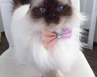 Bow cat ' Rainbow Party '