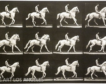 Eadweard Muybridge Photo, White Horse with Rider, 1880s