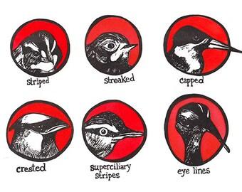 Letterpress Hand-colored Bird Diagram Print