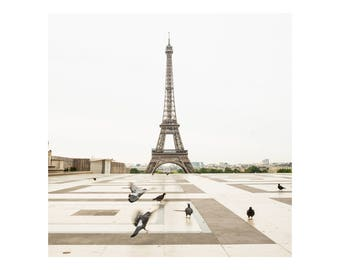 Square Photography Print - Eiffel Tower with Birds - Paris Wall Art - Neutral Home Decor