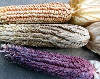15 Ornamental Pod corn seeds-1339