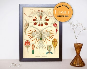 "Vintage illustration from Ernst Haeckel  - framed fine art print, sea creatures,sea life, 8""x10"" ; 11""x14"", FREE SHIPPING - 307"