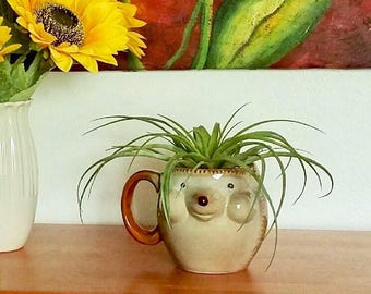 Ceramic Hedgehog Air Planter - Tillandsia Gift Set