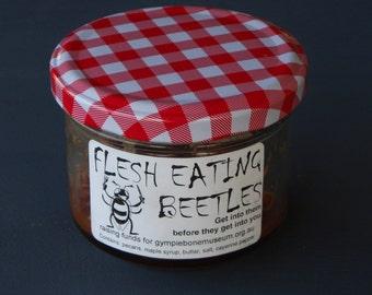 Flesh Eating Beetles Pecan Nuts