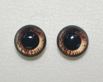 taxidermie yeux verre