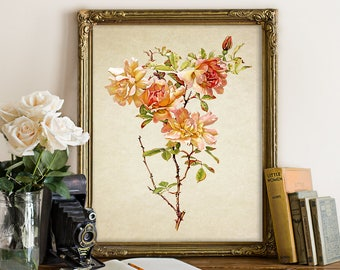 Botanical Print, Roses Print, Roses Botanical Print, Rose Botanical Reproduction, Natural History, Old Roses Botanical Illustration fl135
