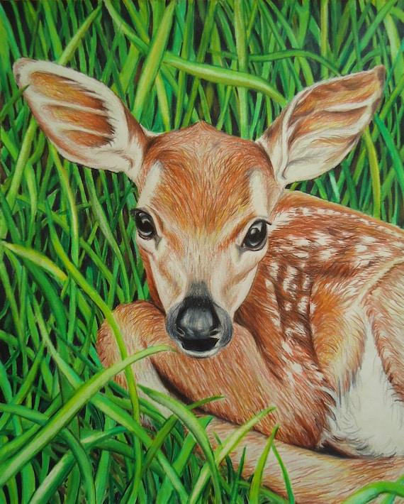 Original Baby Deer art Animal drawing Colored pencil