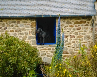 Doggie in the Window - Fine Art - Wall Art - Inquire about Size & Frame Options