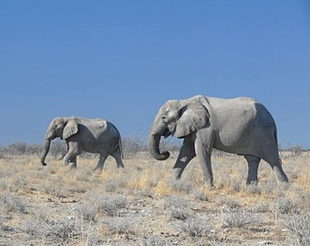 Two Elephants - signed photo print, size 8x10 inches (20x25cm) - african wild animal safari nature photography