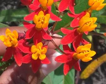 Vibrant Orange and Red Plant