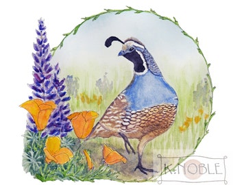 California Quail with Poppies and Lupine - Illustration for Nature Lovers, Birders