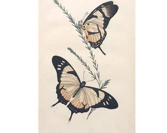 1824 Butterfly Insect Art Plate of Edward Donovan / 1824 British Insect Art / Butterfly Collector Art / Butterfly Study Biology