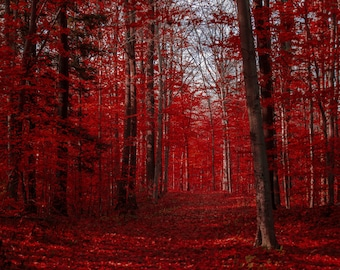 Maple leaves autumn leaves red leaves red forest blood red autumn cranberry red crimson scarlet red leaves maple forest red maple leaf