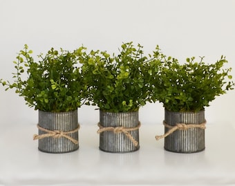 Three Pots of Faux Boxwood in Galvanized Pots;   Spring, Boxwood Centerpiece; Rustic Tins of Boxwood; Farmhouse Table Decor; Boxwood Topiary