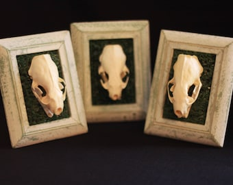 Mink Skull in Mini-Frame with Synthetic Grass