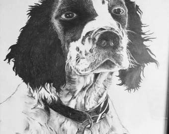 Hand Sketched Pet Portraits