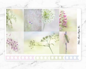 A la Carte - Spring Renew