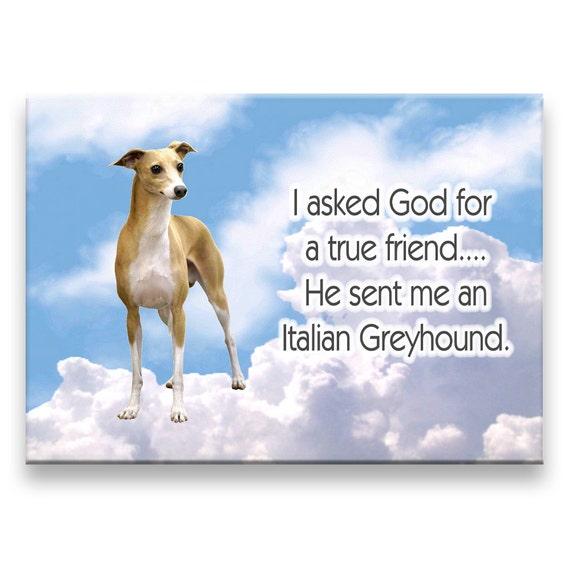 Italian Greyhound True Friend Fridge Magnet