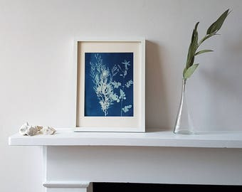 Wall Leaf & Art Flower Print, Handmade Botanical Cyanotype Wall Print, Ginko Leaves and Ferns