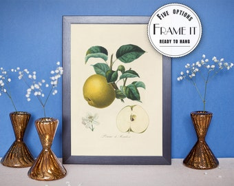 "Vintage Botanical illustration of Apple  - framed fine art print, botanical art, home decor 8""x10"" ; 11""x14"", FREE SHIPPING - 322"