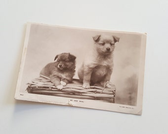 Antique fluffy puppy art postcard - puppy art, puppy print, vintage dog print, vintage dog art, edwardian dog, vintage dog, vintage puppy.