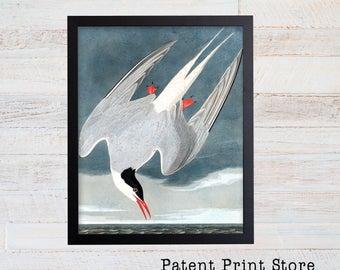 James Audubon Arctic Tern Art Print. Bird Print. Audubon Prints. Coastal Wall Art. Beach House Art. Nautical Decor. Coastal Art Prints.