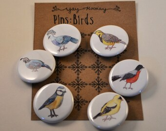 Birds, pin button badges, magnets hand drawn illustrations, Robin, Quail, Blue Tit, Meadowlark, Victoria Crowned Pigeon, and Goldfinch
