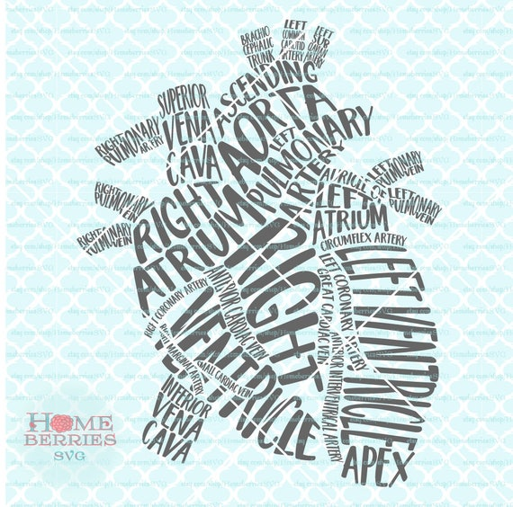 Heart Typography Gross Anatomy of the Heart RN Nurse Doctor
