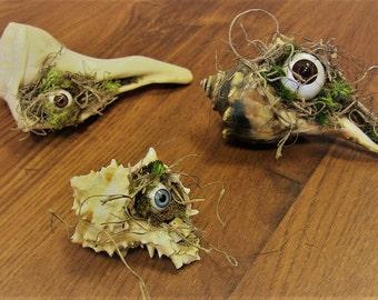 Sea Peepers! - Oddity Seashell Creature Curiosities