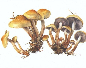 Soviet Vintage Mushroom Postcard/Educational Fungus Art/Mushroom Print/USSR Postcards/Botanical Illustration/Natural Science Prints/1980's