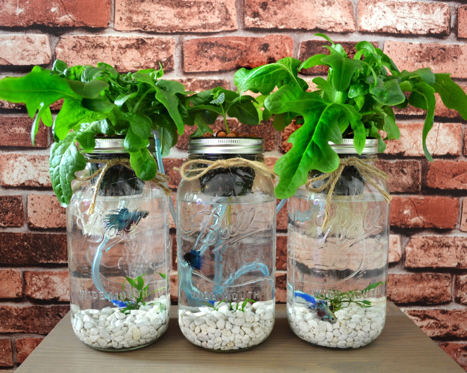 3 mason jar aquaponics kit build your own hydroponics herb. Black Bedroom Furniture Sets. Home Design Ideas