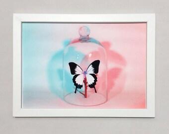 Print - Butterfly in Bell-jar A3
