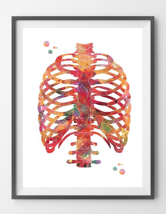 Brustkorb Aquarell Druck Anatomie Kunst Brustkorb Plakat