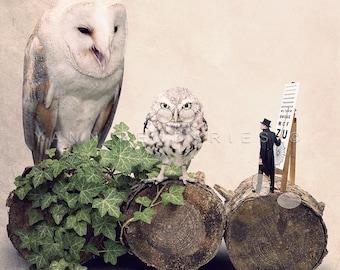 Photographie chouette, Chouette hulotte, photo oiseau,déco pour opticien, décor opticien ornithologie, photo d'art, cadeau pour opticien