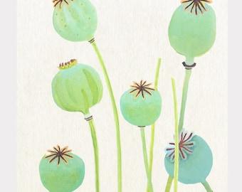 Large Art Print:  Poppy Pods on Ecru