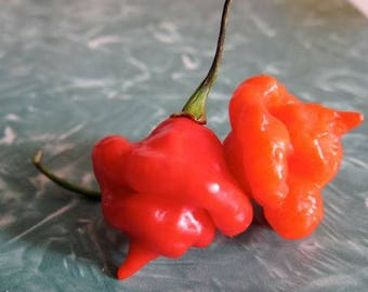 Aji Dulce Red Pepper, heirloom  10 seeds, mild and sweet pepper with   looks of a Scorpion pepper