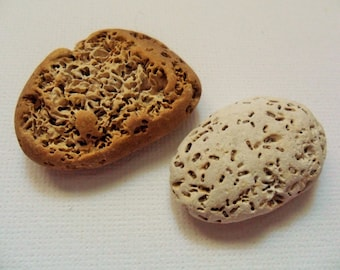 2 Pitted & pockmarked Norfolk beach pebbles - Lovely English beach finds