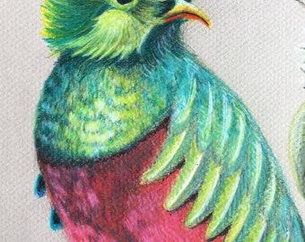 Custom Bird Drawing