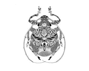 Illustration insect (Reproduction)