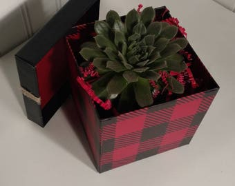 SUCCULENT GIFT Box. Happy Birthday. Congrats. I love you. Happy Anniversary. Welcome Home and more!