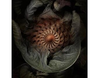 Fine Art Print - Mandala from nature - Revocation Partus 2